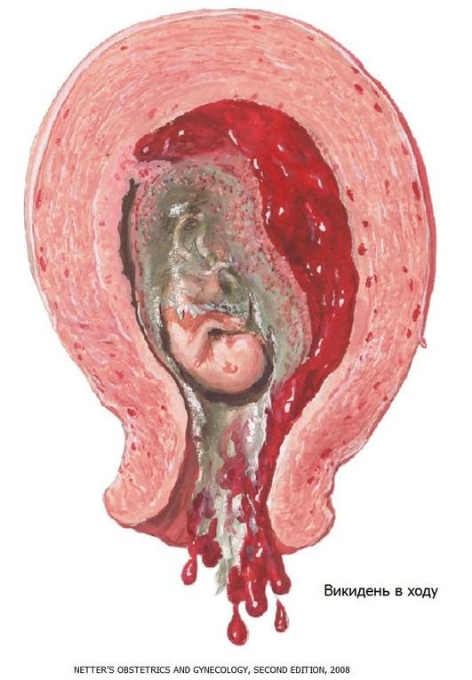 Нужно ли беременным есть семечки 58